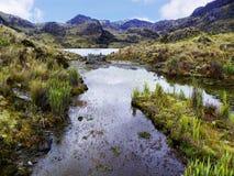 Nationalpark El Cajas Toreadora sjö ecuador royaltyfria bilder