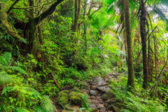 Nationalpark EL Yunque Lizenzfreie Stockfotografie