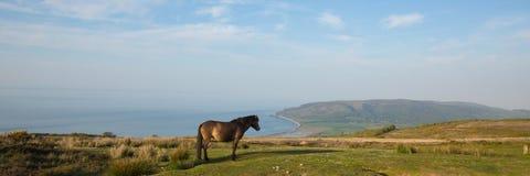 Nationalpark Exmoor mit Pony in Richtung zum Küstenpanoramablick Porlock Somerset Lizenzfreies Stockfoto