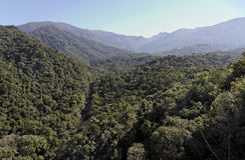 nationalpark för atlanticafloresta itatiaia Royaltyfri Bild