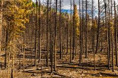 Nationalpark 2015 för efterdyningReynolds Creek Wildland Forest Fire glaciär royaltyfria bilder