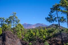 Nationalpark för El Teide Arkivfoto