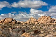 Nationalpark för Joshua Tree Fotografering för Bildbyråer