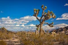Nationalpark för Joshua Tree Arkivbilder