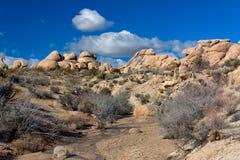 Nationalpark för Joshua Tree Arkivfoto