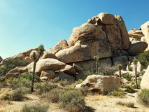 Nationalpark för Joshua Tree, USA arkivbild