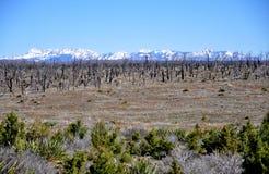 Nationalpark för Mesa Verde Royaltyfri Fotografi