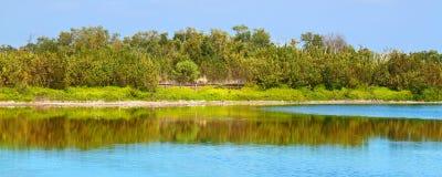 Nationalpark för Eco dammEverglades Royaltyfria Bilder