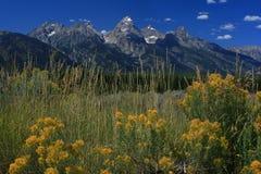 Nationalpark Grant-Tetons stockfotos
