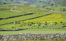 Nationalpark Höchstbezirkes des England-Derbyshire Stockfotos