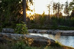 Nationalpark Harz sundown stock images
