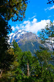 Nationalpark Hollyford Fiordland, Neuseeland stockbild