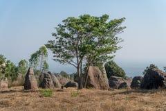 nationalpark i Thailand, träd och stor sten i skogen Fotografering för Bildbyråer
