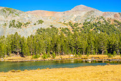 Nationalpark in Kalifornien Lizenzfreies Stockbild