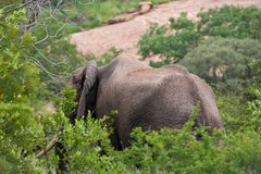 Nationalpark Kruger, Mpumalanga, Südafrika lizenzfreies stockfoto
