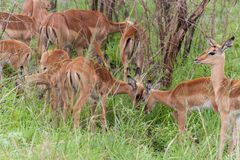Nationalpark Kruger, Mpumalanga, Südafrika lizenzfreies stockbild