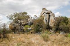 Nationalpark Kruger, Savanne Berühmter Kanonkop Weinberg nahe malerischen Bergen am Frühling Stockfoto