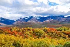 Nationalpark-Landschaft Denali Stockbilder