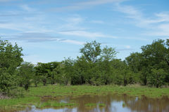 Nationalpark Matusadona nach schwerem Niederschlag Stockfoto