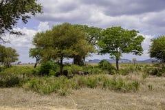 Nationalpark Mikumi Stockfoto