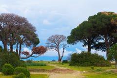 Nationalpark mit Bäumen auf der Küste Lizenzfreie Stockbilder