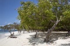Nationalpark Morrocoy, ein Paradies mit Kokosnussbäumen, weißes San Stockbild