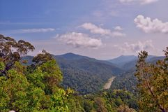 Nationalpark Pahang, Malaysia Stockbild
