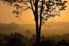 Nationalpark Phu Langka, die Landschaft von nebelhaften Bergen und bei Sonnenaufgang, Phayao Thailand Lizenzfreie Stockbilder