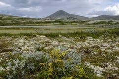 Nationalpark Rondane im Sommer stockbild