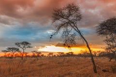 Nationalpark Serengeti in Nordwest-Tansania stockbild
