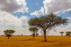 Nationalpark Serengeti in Nordwest-Tansania stockbilder