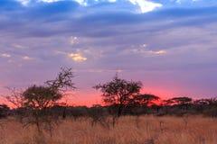 Nationalpark Serengeti in Nordwest-Tansania stockfotografie