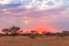 Nationalpark Serengeti in Nordwest-Tansania stockfotos