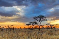 Nationalpark Serengeti in Nordwest-Tansania lizenzfreies stockfoto