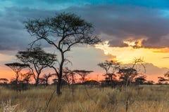 Nationalpark Serengeti in Nordwest-Tansania lizenzfreie stockbilder