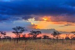 Nationalpark Serengeti in Nordwest-Tansania lizenzfreie stockfotografie