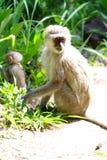 Nationalpark Simbabwe Victoria Fallss Stockfotografie