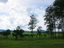 Nationalpark skog, i Thailand Arkivbilder
