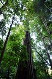 Nationalpark Springbrook - Queensland Australien Stockbild