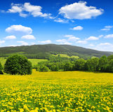 Nationalpark Sumava - Tschechische Republik Stockbilder