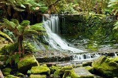 nationalpark tasmania för mt för fallsfälthästsko Arkivbilder