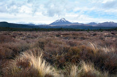 Nationalpark Tongariro - Berg Ngauruhoe stockbild