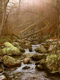 Nationalpark Virginia Shenandoah Stockbilder