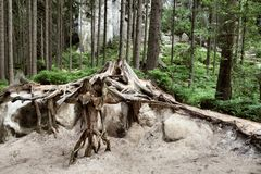 Nationalpark von Adrspach-Teplicefelsen Felsen-Stadt Tschechische Republik Stockfoto