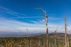 Nationalpark wald Bayerischer горы Lusen Высушенные деревья на верхней части горы Взгляд долины в национальном Bayerisch Стоковые Фотографии RF
