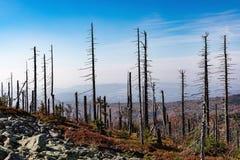 Nationalpark wald Bayerischer горы Lusen Высушенные деревья на верхней части горы Взгляд долины в национальном Bayerisch Стоковая Фотография RF