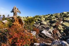 Nationalpark wald Bayerischer горы Lusen Высушенные деревья на верхней части горы Взгляд долины в национальном Bayerisch Стоковое Изображение RF