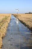 Nationalpark Weerribben-Wieden in den Niederlanden Lizenzfreie Stockfotografie