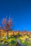 Nationalpark Wonderful Torres Del Paine, Chile, Patagonia Lizenzfreie Stockfotos