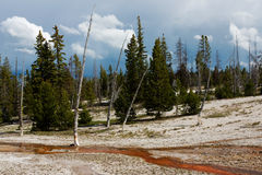 nationalpark yellowstone Royaltyfri Fotografi